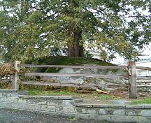 View of Rock Tree, 2004; City of Surrey