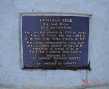 Trattle Memorial Maple Tree marker; Township of Langley, 2006