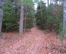 This image shows a trail in the Pines Conservation Park during the fall